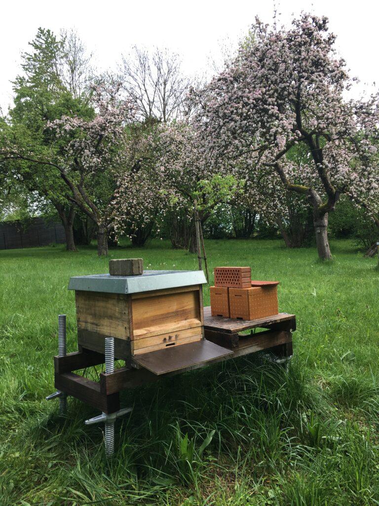 Schwarm am Bienenstand
